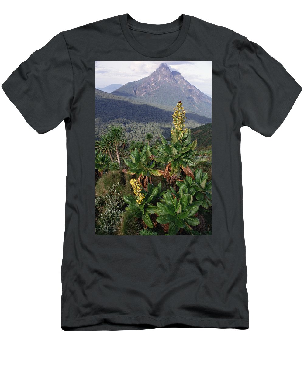 Feb0514 Men's T-Shirt (Athletic Fit) featuring the photograph Mt Mikeno Rwanda by Gerry Ellis