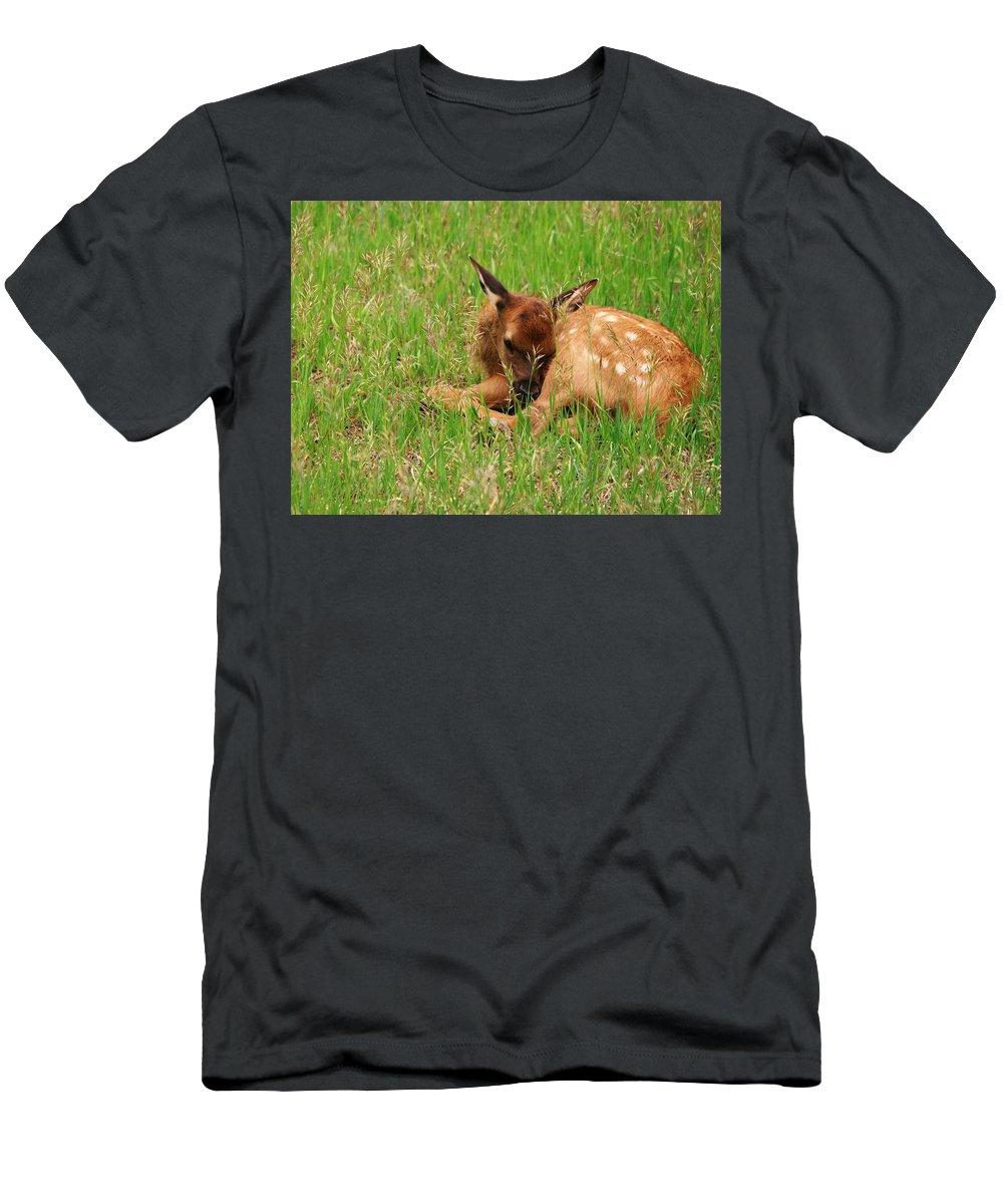 Elk Men's T-Shirt (Athletic Fit) featuring the photograph Nap Time by Karen Jones