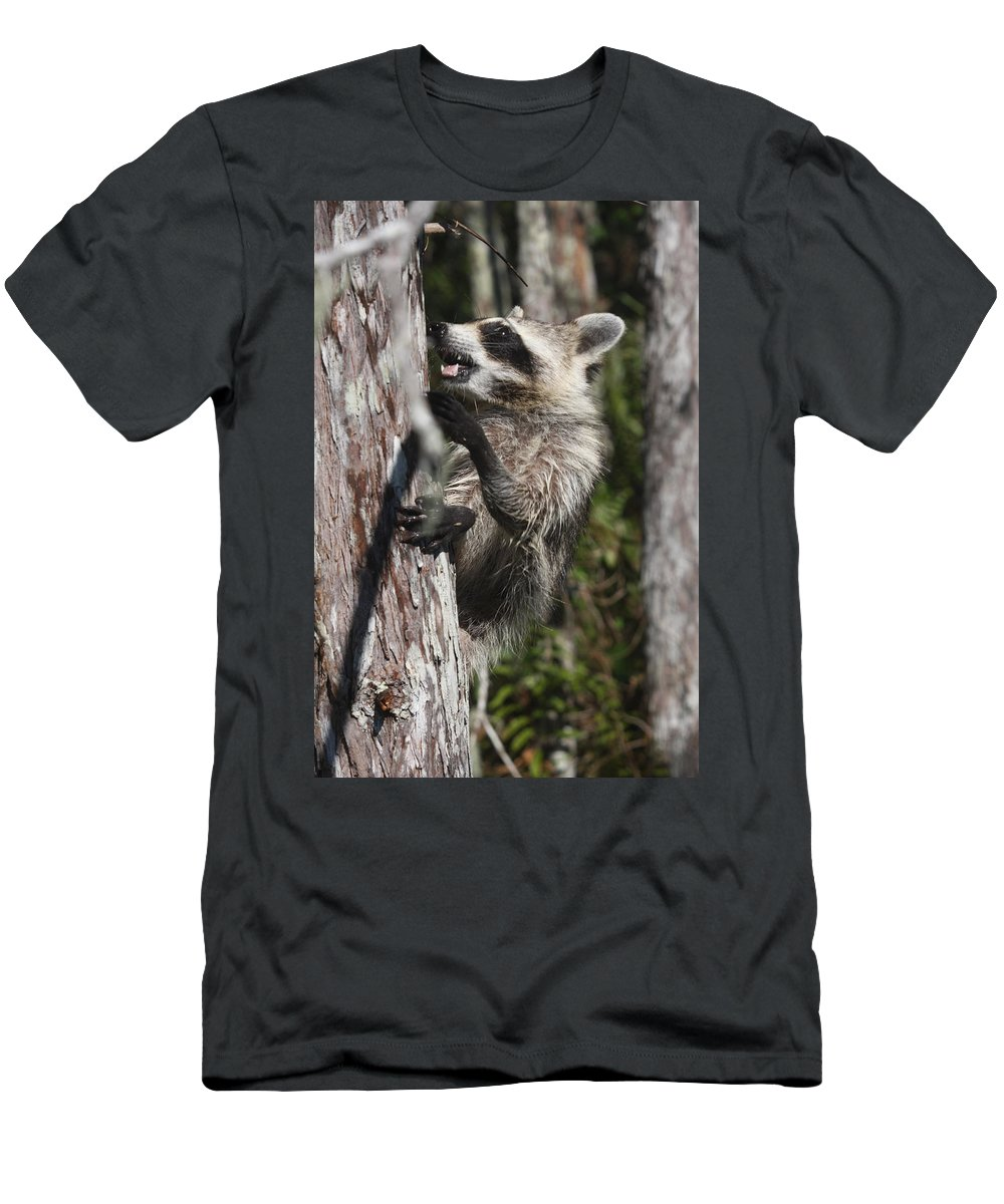 Raccoon Men's T-Shirt (Athletic Fit) featuring the photograph Nasty Raccoon In A Tree by Christiane Schulze Art And Photography