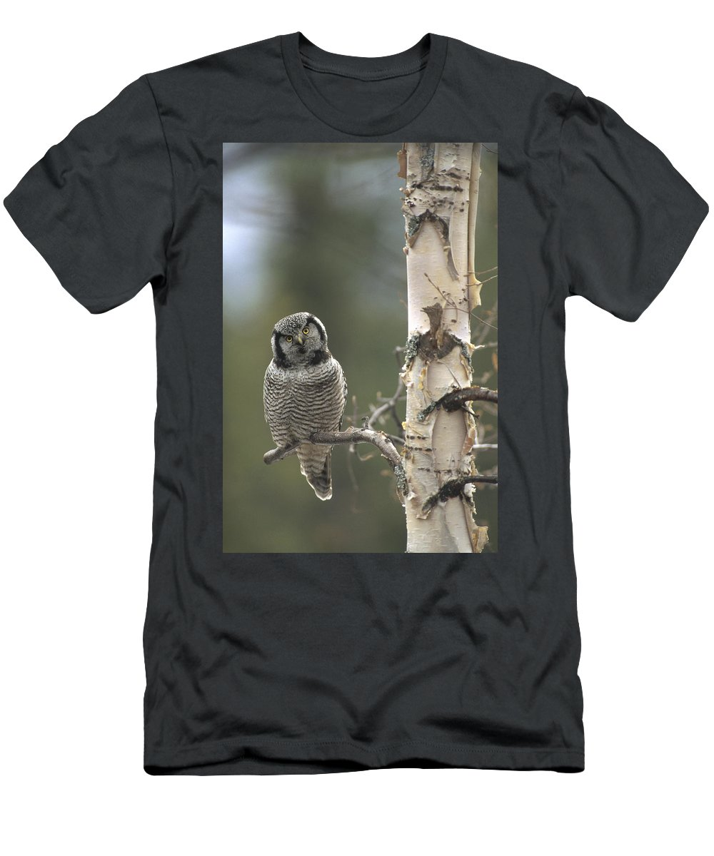 Feb0514 Men's T-Shirt (Athletic Fit) featuring the photograph Northern Hawk Owl In The Spring Alaska by Michael Quinton