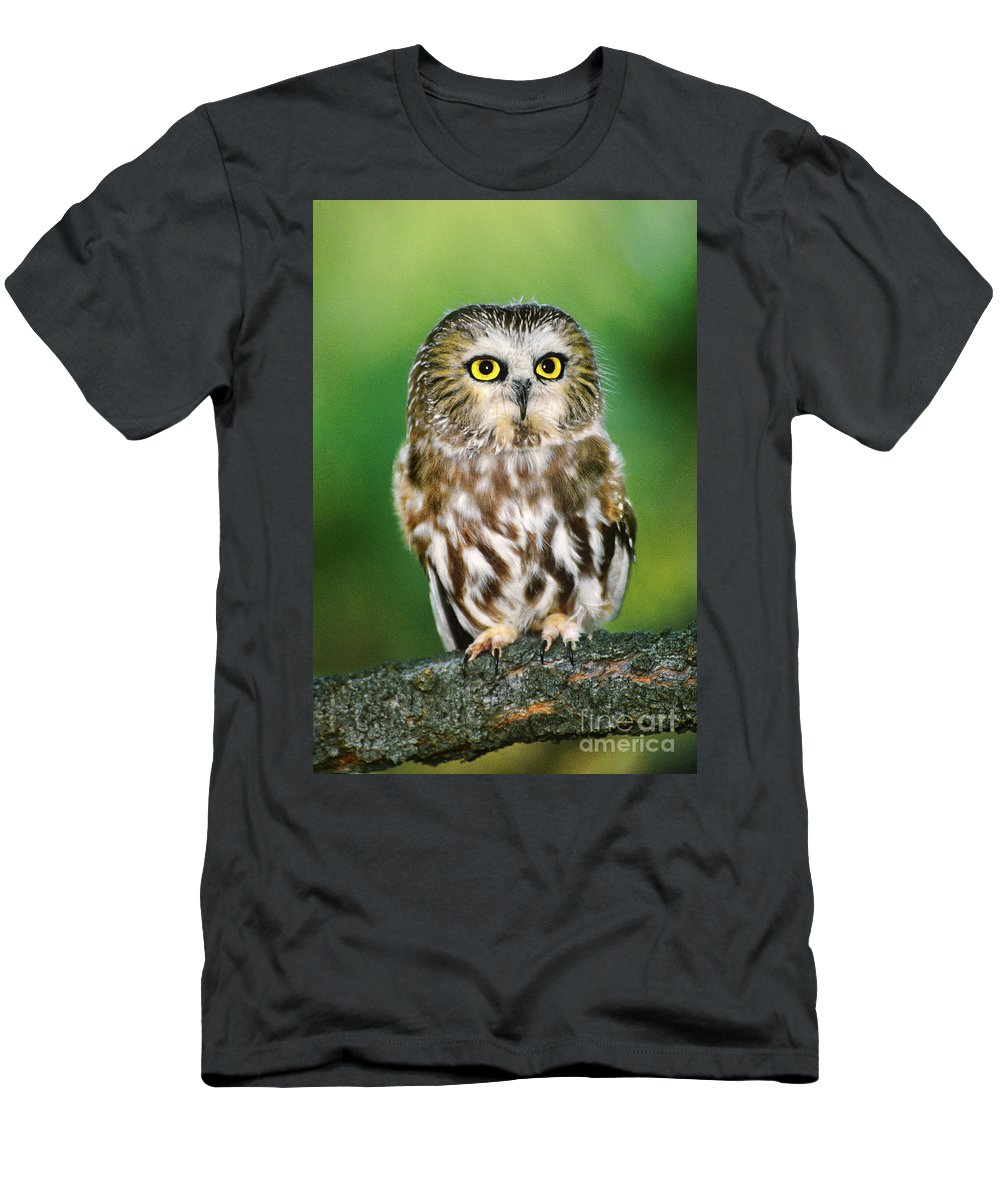 Dave Welling Men's T-Shirt (Athletic Fit) featuring the photograph Northern Saw-whet Owl Aegolius Acadicus Wildlife Rescue by Dave Welling
