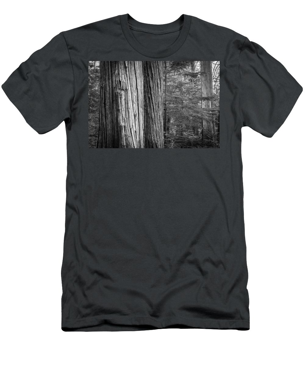 Glacier National Park Men's T-Shirt (Athletic Fit) featuring the photograph Old Growth Cedars Glacier National Park Bw by Rich Franco