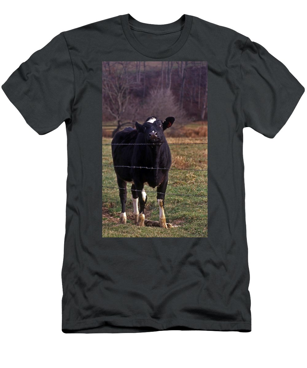 Cow Men's T-Shirt (Athletic Fit) featuring the photograph On The Edge Of Madness by Skip Willits