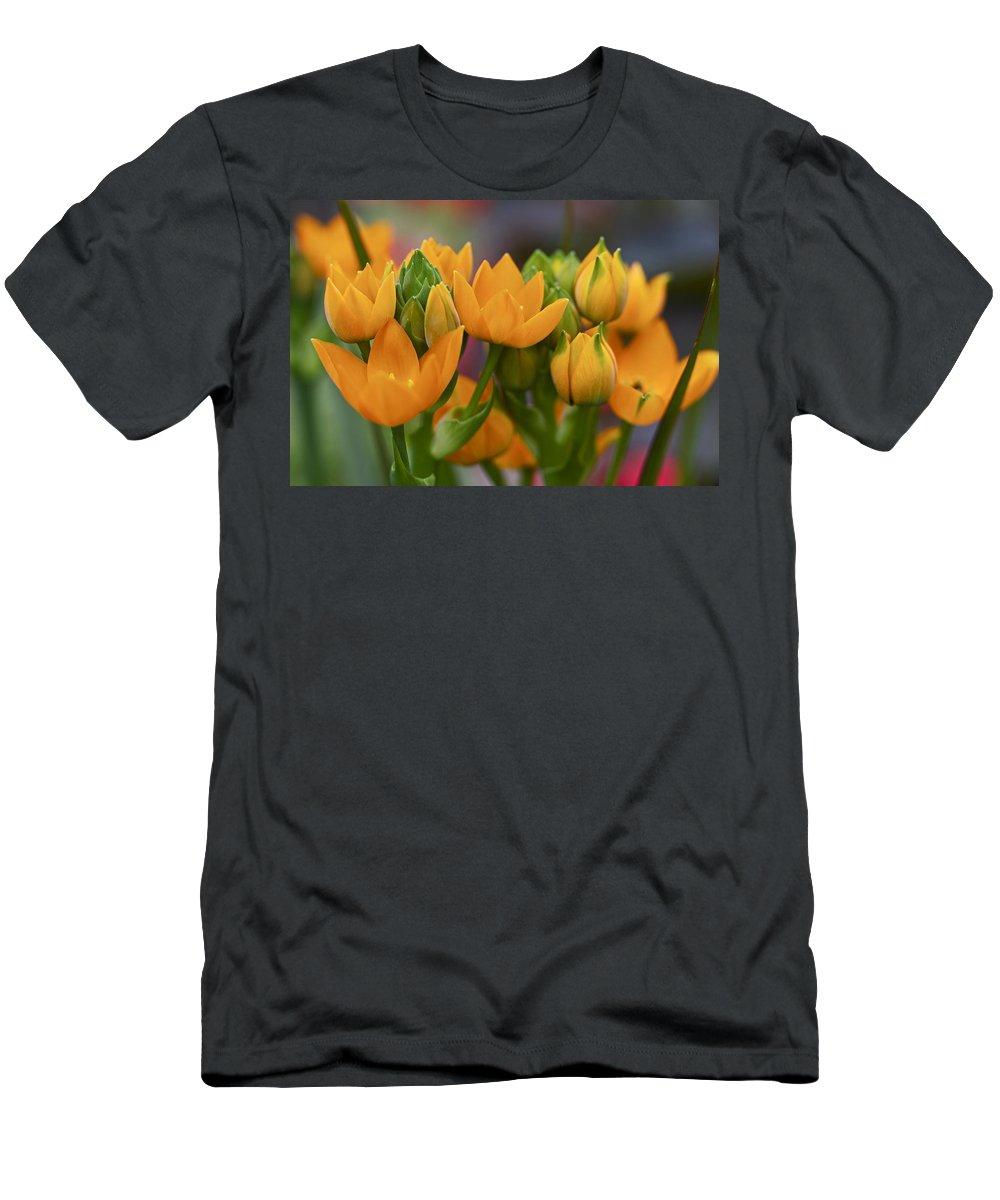 orange Stars Men's T-Shirt (Athletic Fit) featuring the photograph Orange Stars - Floral - Ornithogalum Dubium - Sun Stars by Mother Nature