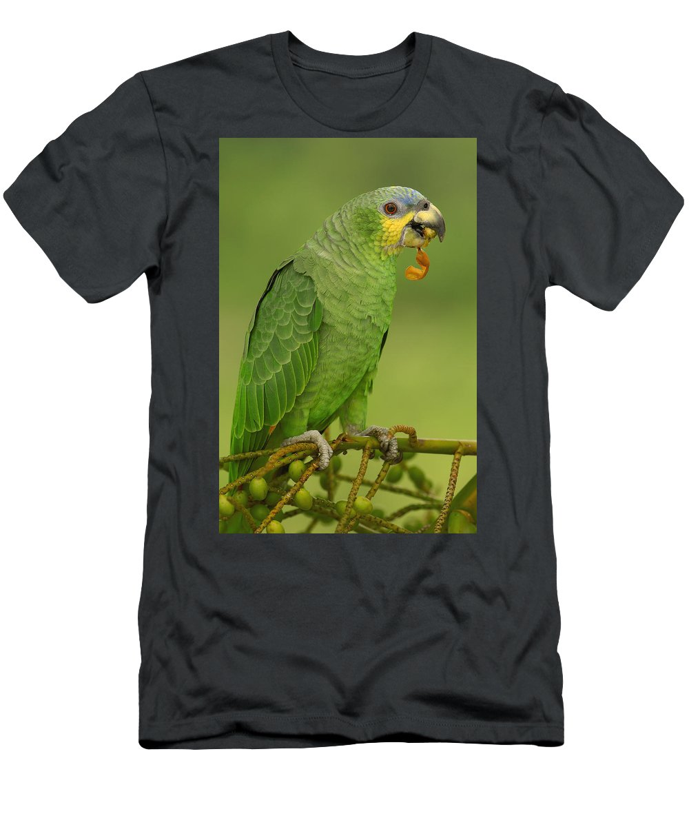 Feb0514 Men's T-Shirt (Athletic Fit) featuring the photograph Orange-winged Parrot Amazonian Ecuador by Pete Oxford