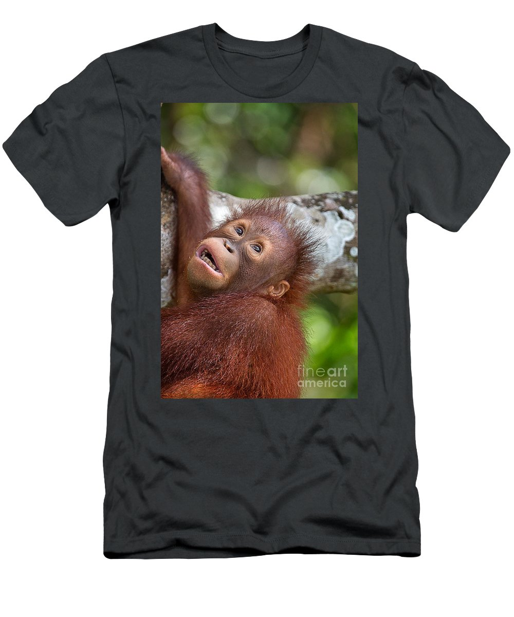 Animal Men's T-Shirt (Athletic Fit) featuring the photograph Orphan Baby Orangutan by Louise Heusinkveld