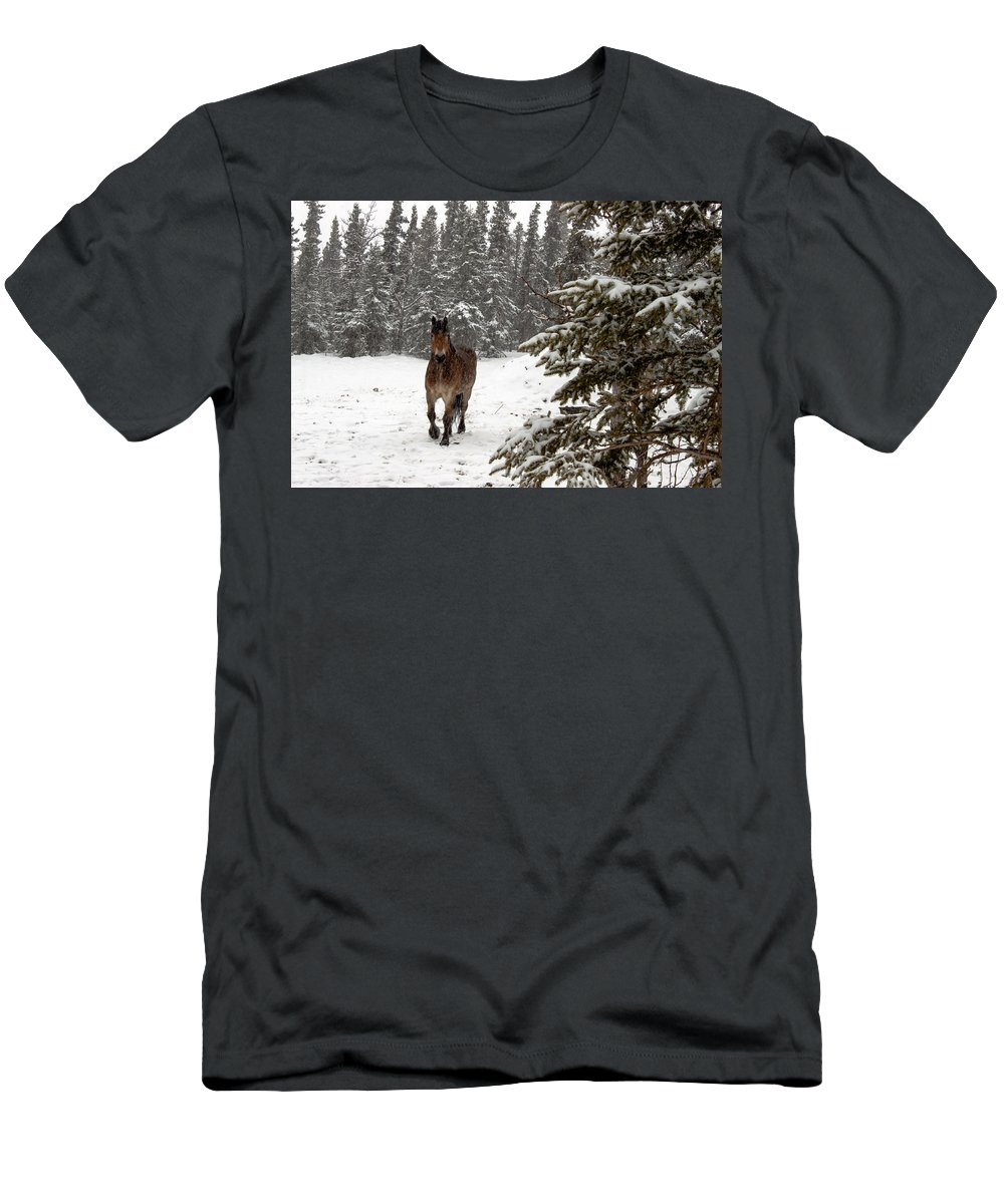 Horse Men's T-Shirt (Athletic Fit) featuring the photograph Out For A Walk by Thomas Sellberg