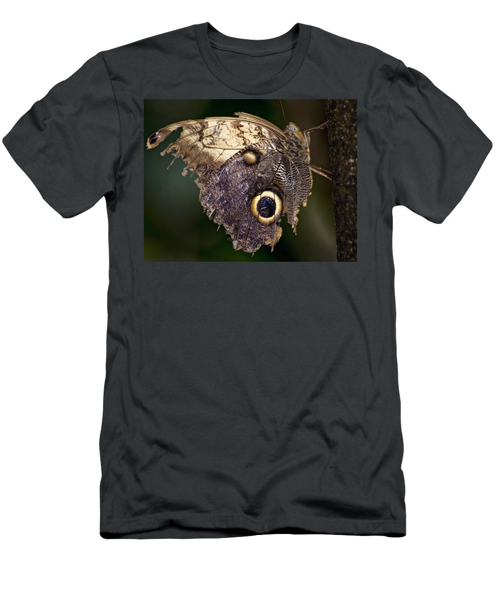 Butterfly Men's T-Shirt (Athletic Fit) featuring the photograph Owl Butterfly by Heather Applegate