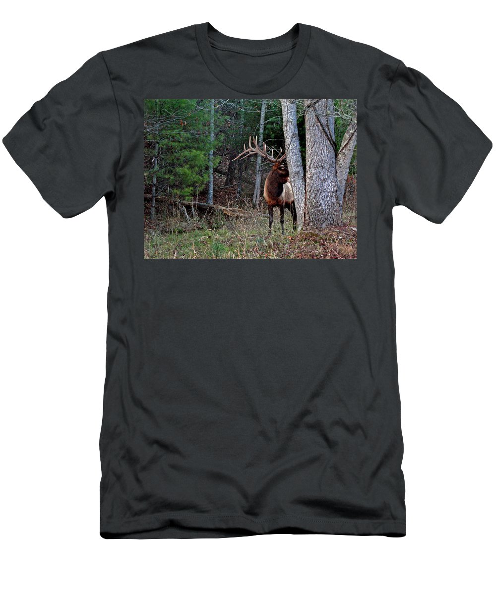 Elk Men's T-Shirt (Athletic Fit) featuring the photograph Peek A Boo Bull by Skip Willits