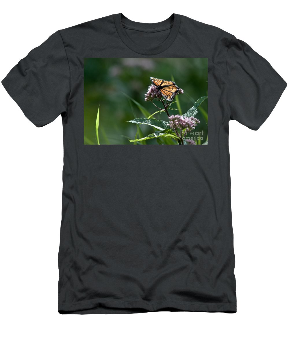 Monarch Men's T-Shirt (Athletic Fit) featuring the photograph Perfect Monarch by Cheryl Baxter