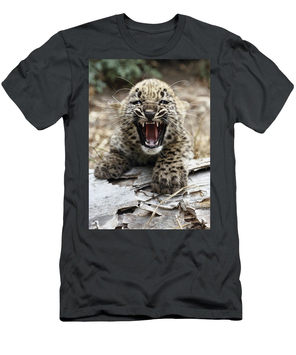 Feb0514 Men's T-Shirt (Athletic Fit) featuring the photograph Persian Leopard Cub Snarling by San Diego Zoo