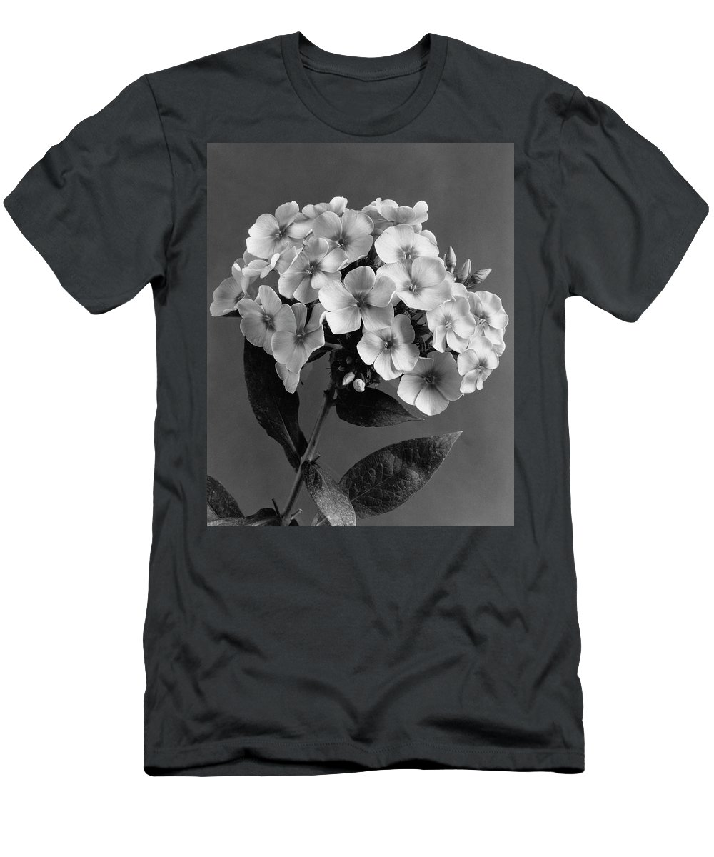 Flowers Men's T-Shirt (Athletic Fit) featuring the photograph Phlox Blossoms by J. Horace McFarland