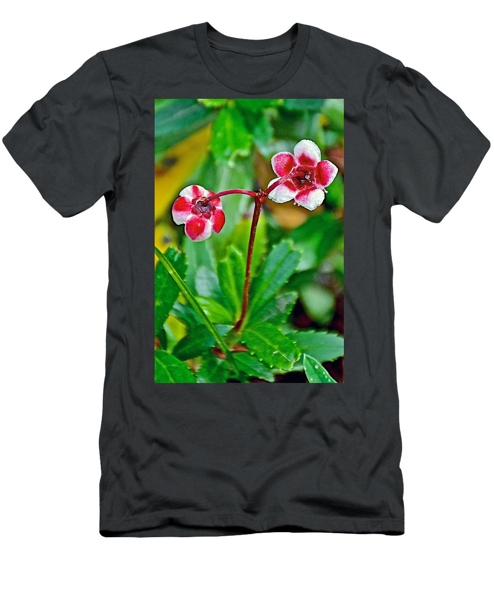Pipsissewao Trail To Swan Lake In Grand Teton National Park Men's T-Shirt (Athletic Fit) featuring the photograph Pipsissewa On Trail To Swan Lake In Grand Teton National Park-wyoming by Ruth Hager