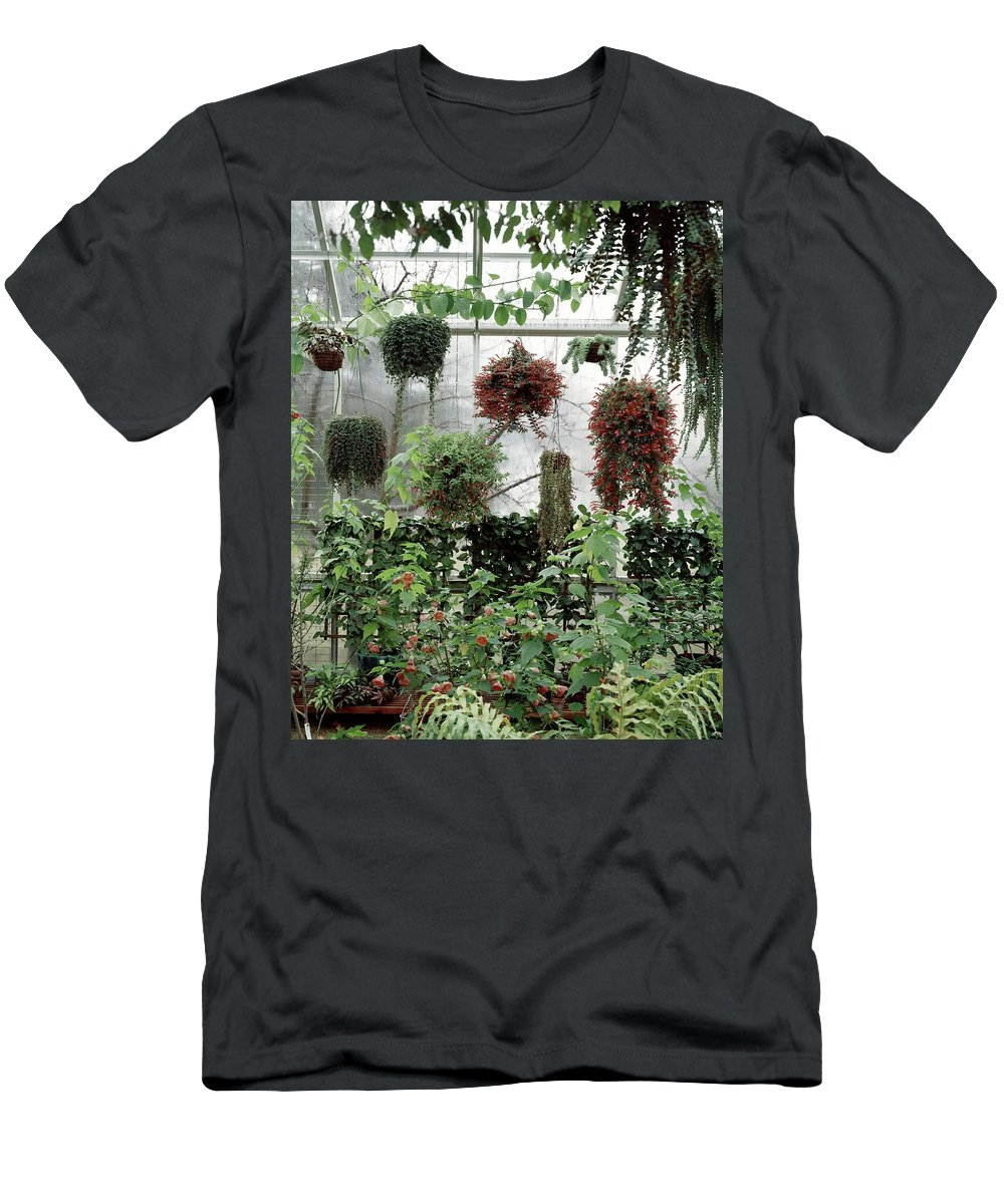 Indoors T-Shirt featuring the photograph Plants Hanging In A Greenhouse by Wiliam Grigsby