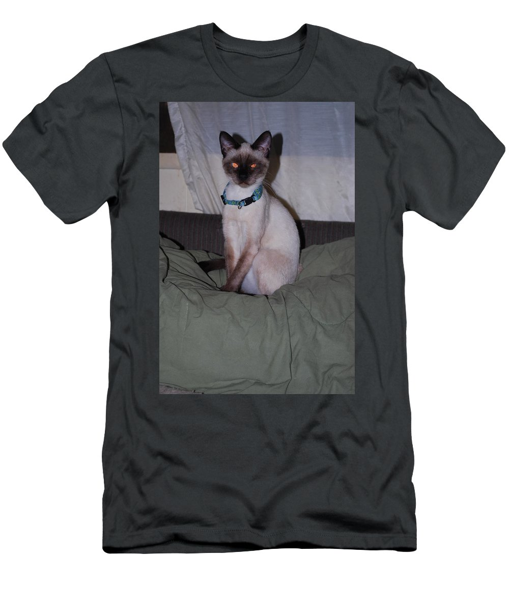 Striking A Fine Pose.fire In His Eyes. Cat Men's T-Shirt (Athletic Fit) featuring the photograph Pretty Boy by Robert Floyd