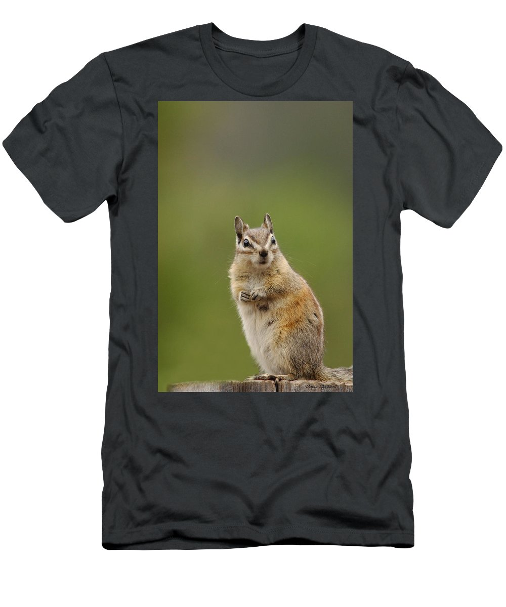 Squirrel Men's T-Shirt (Athletic Fit) featuring the photograph Pretty Please by Donna Blackhall