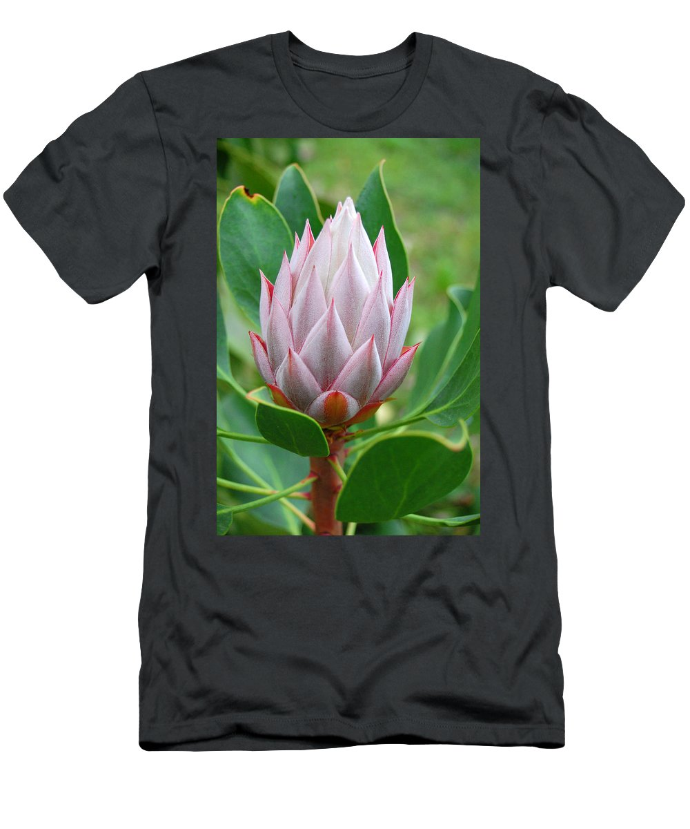 Kula Botanical Gardens Men's T-Shirt (Athletic Fit) featuring the photograph Protea Flower Blossoming by Amy Fose