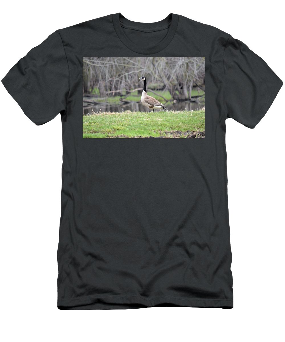 Goose Men's T-Shirt (Athletic Fit) featuring the photograph Proud Goose by Bonfire Photography