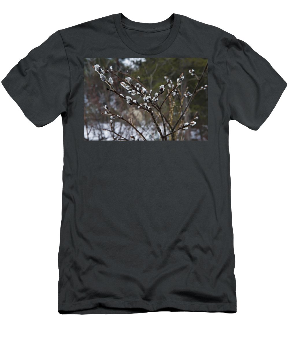 Lake Men's T-Shirt (Athletic Fit) featuring the photograph Pussy Willow In The Rain by Evie Carrier