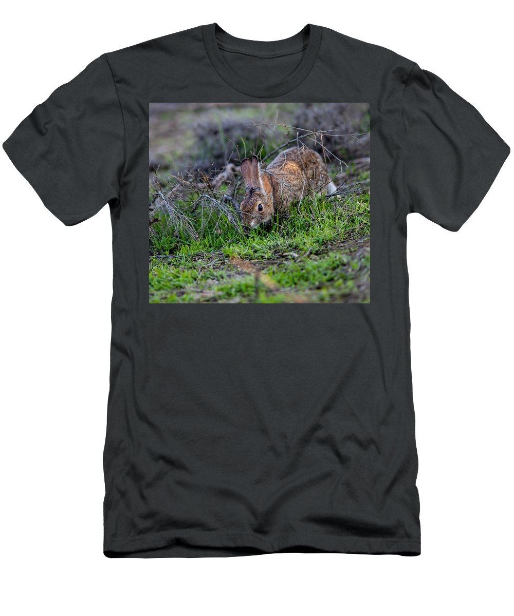 Rabbit Men's T-Shirt (Athletic Fit) featuring the photograph Rabbitfeedind by Brian Williamson