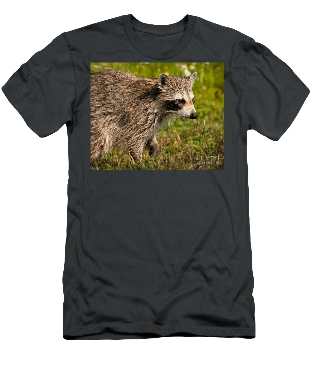 Raccoon Men's T-Shirt (Athletic Fit) featuring the photograph Raccoon by Photos By Cassandra