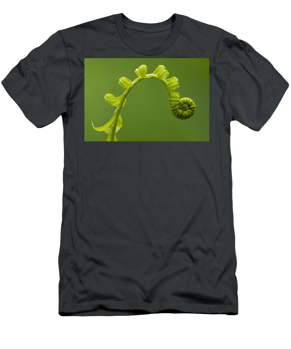 Feb0514 Men's T-Shirt (Athletic Fit) featuring the photograph Rainforest Fern Unfurling Sabah Borneo by Sebastian Kennerknecht