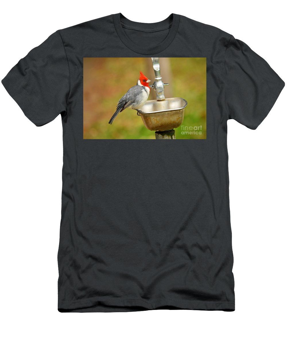 Nature Men's T-Shirt (Athletic Fit) featuring the digital art Red Crested Cardinal by Eva Kaufman