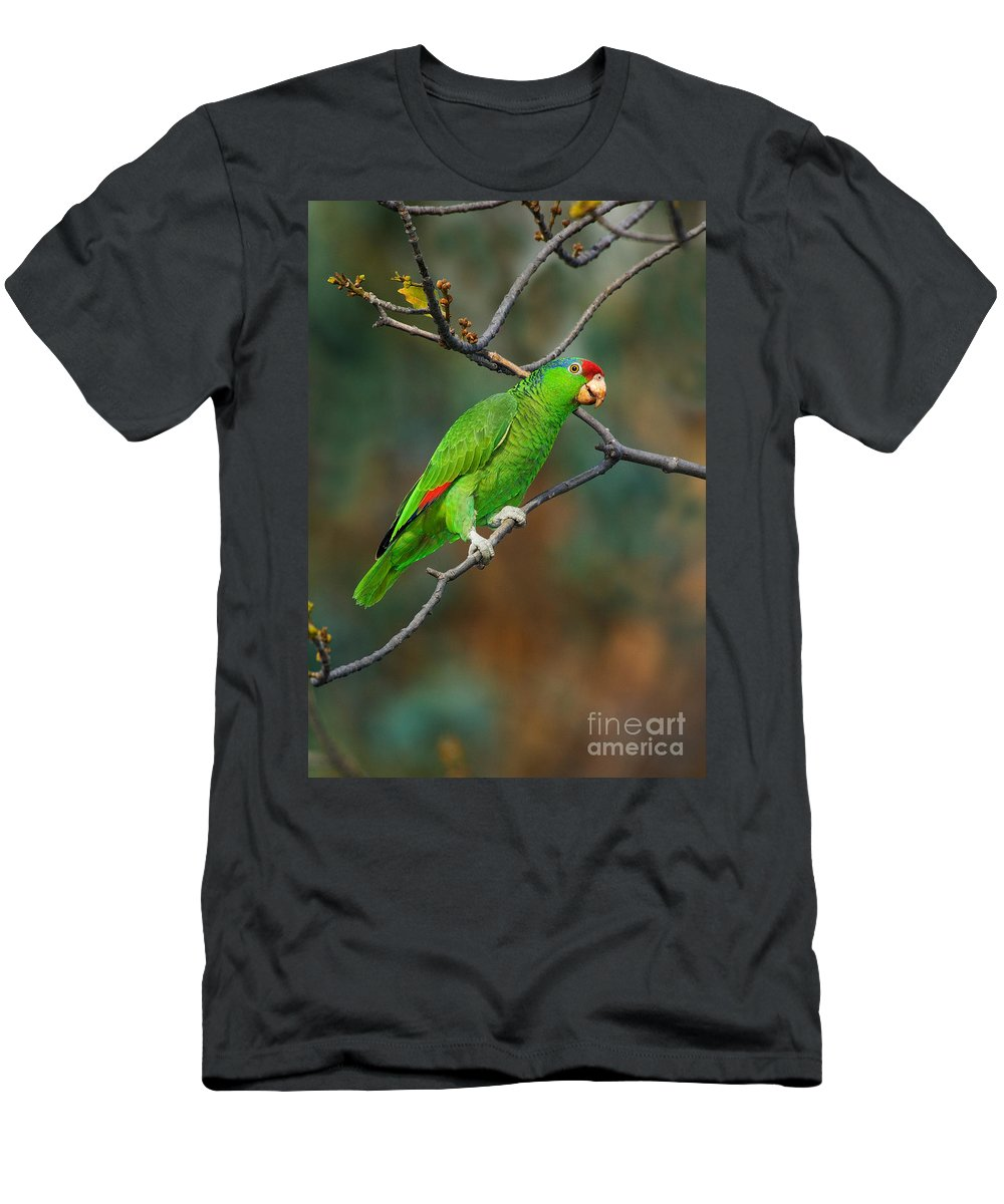Red-crowned Amazon Men's T-Shirt (Athletic Fit) featuring the photograph Red-crowned Amazon by Anthony Mercieca