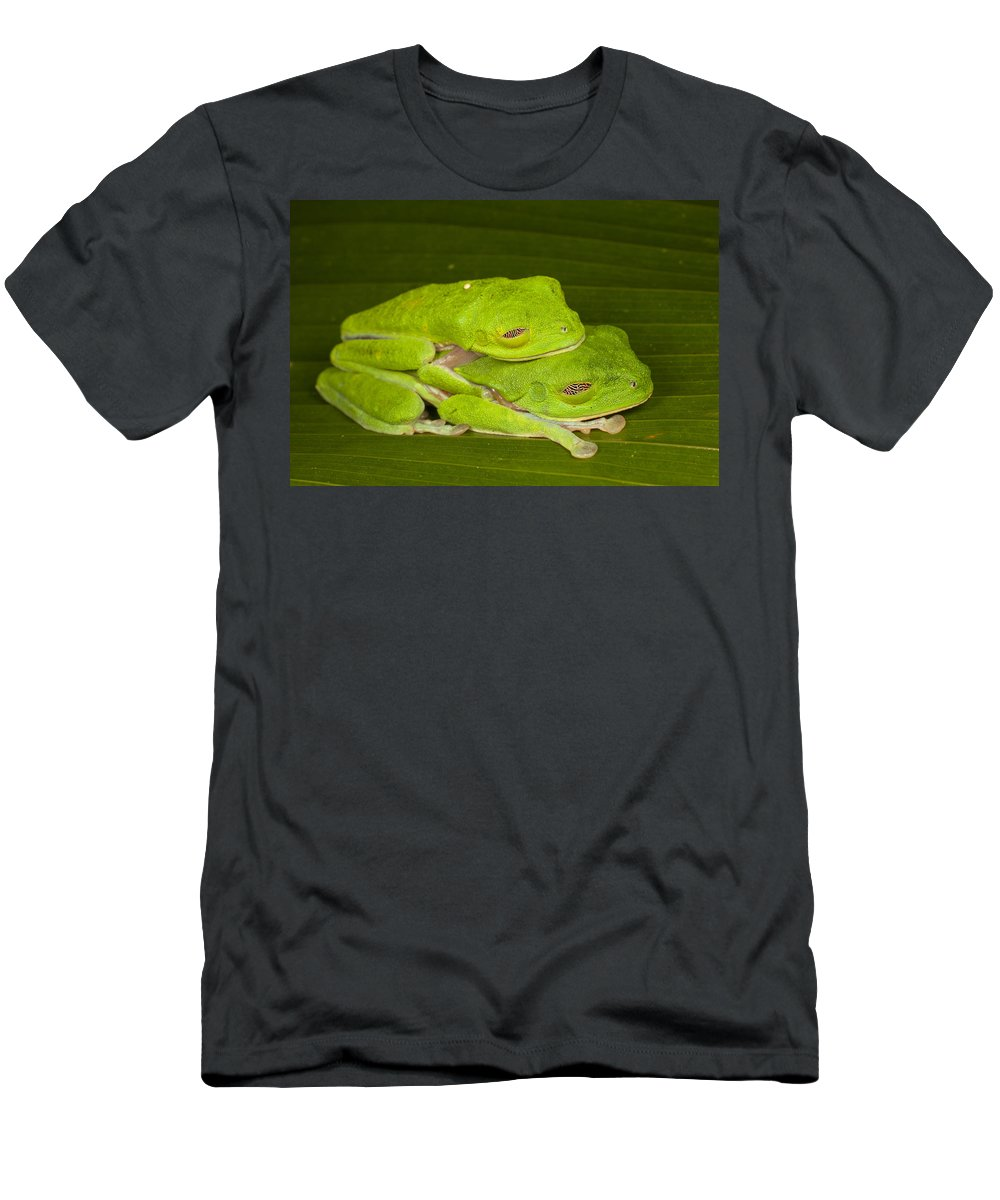Feb0514 Men's T-Shirt (Athletic Fit) featuring the photograph Red-eyed Tree Frogs In Amplexus Sleeping by Ingo Arndt