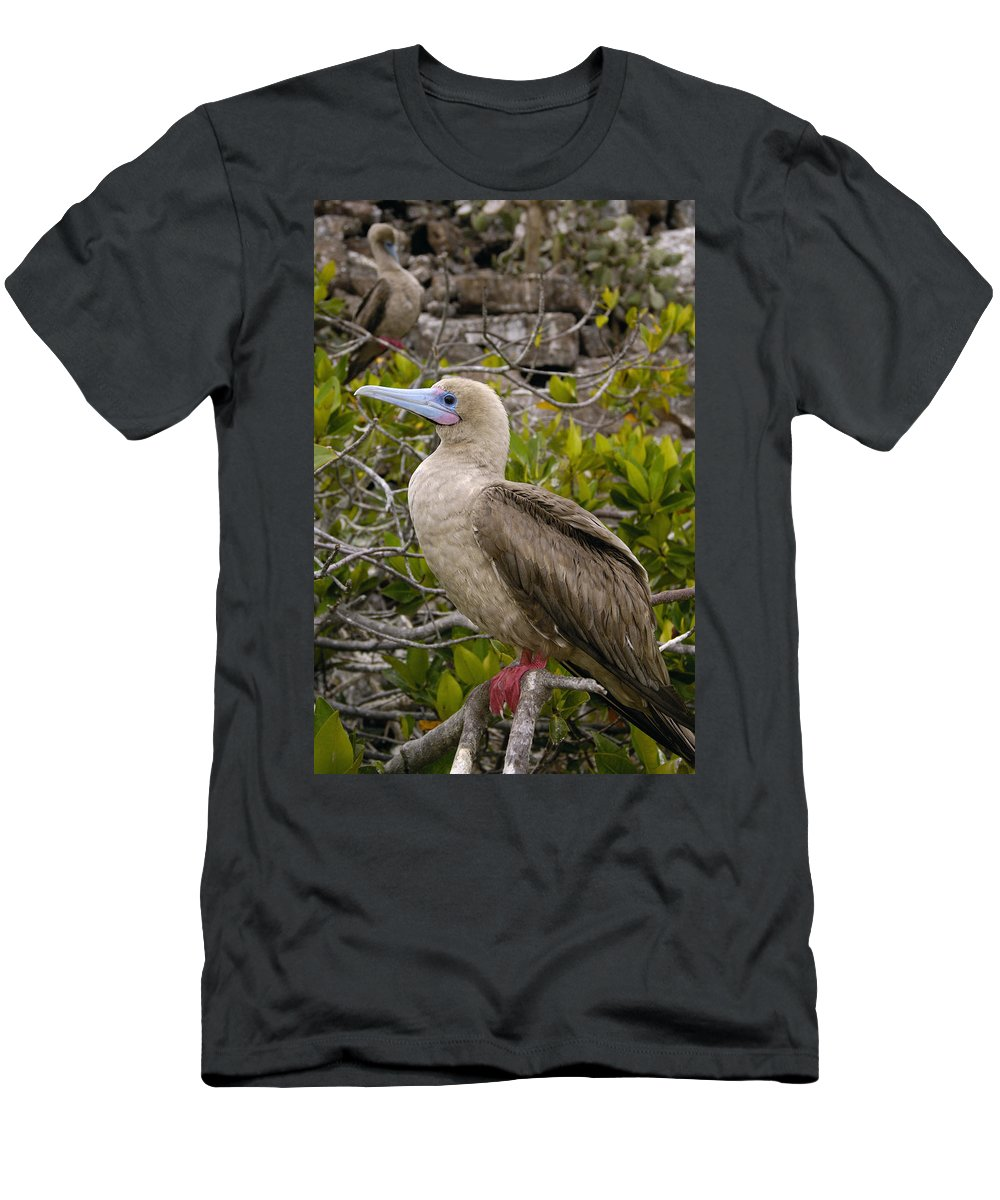Feb0514 Men's T-Shirt (Athletic Fit) featuring the photograph Red-footed Booby Galapagos Islands by Pete Oxford
