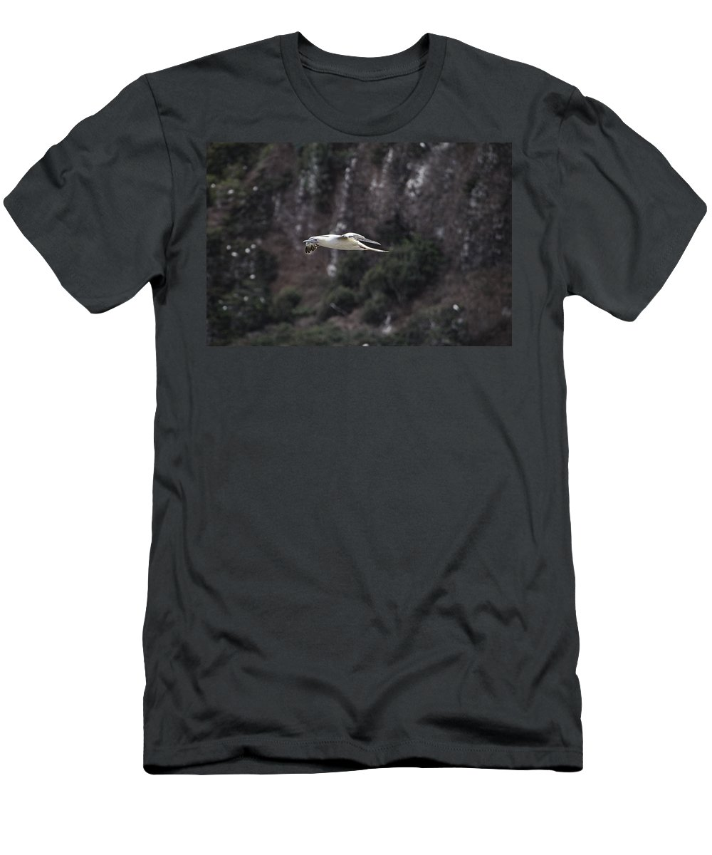Red Footed Booby Men's T-Shirt (Athletic Fit) featuring the photograph Red Footed Booby In Flight by Douglas Barnard
