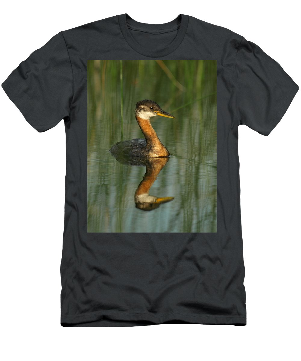 Peterson Nature Photography Men's T-Shirt (Athletic Fit) featuring the photograph Red-necked Grebe by James Peterson