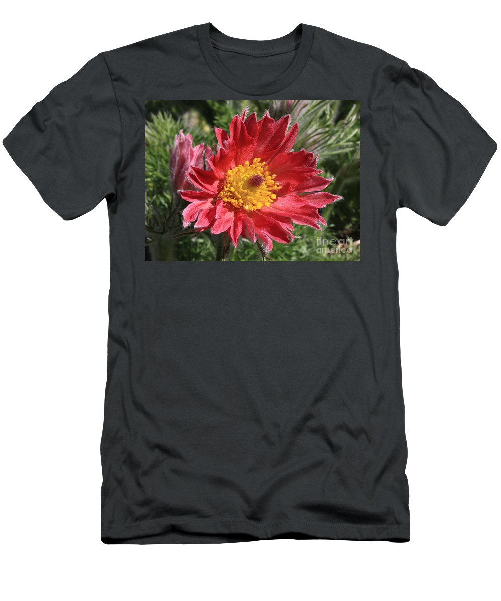 Red Pasque Flower Men's T-Shirt (Athletic Fit) featuring the photograph Red Pasque Flower by Carol Groenen