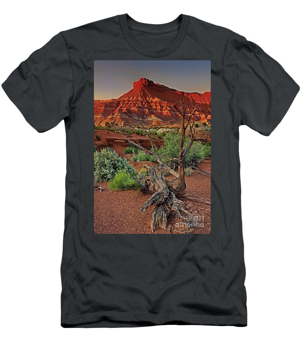 North America Men's T-Shirt (Athletic Fit) featuring the photograph Red Rock Butte And Juniper Snag Paria Canyon Utah by Dave Welling