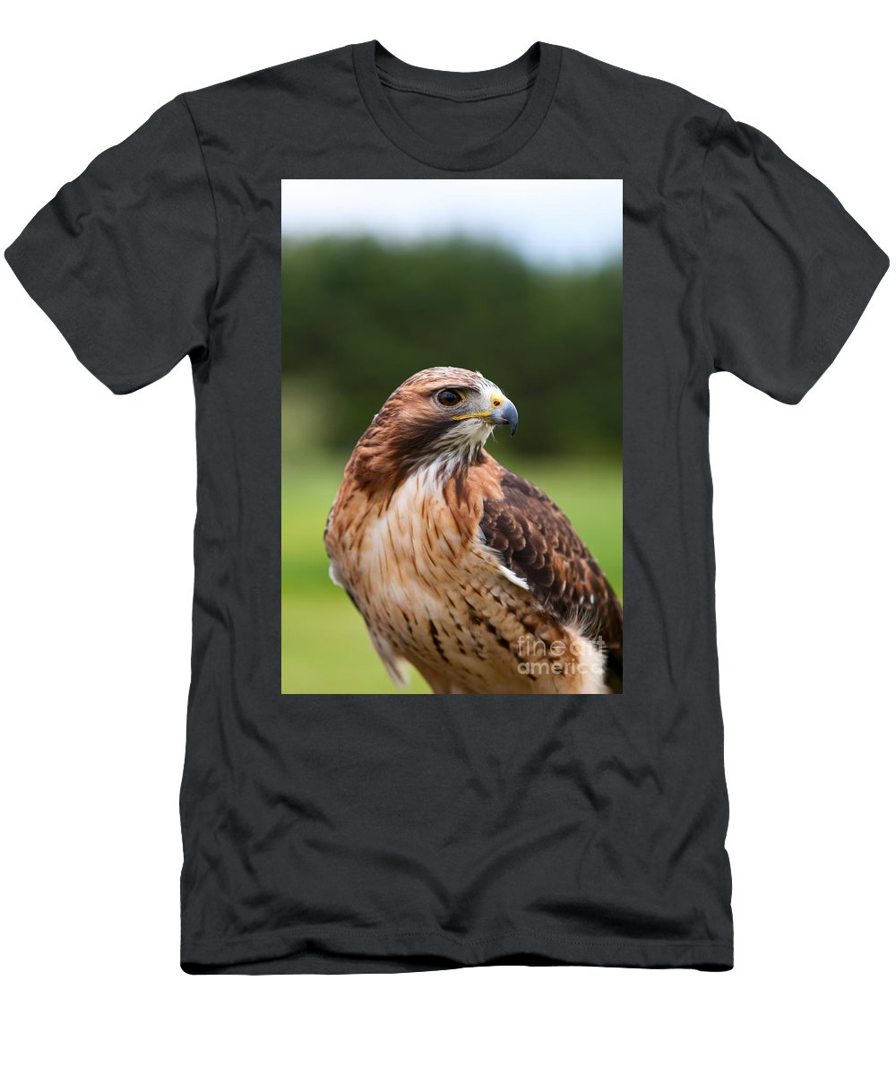 Hawk Men's T-Shirt (Athletic Fit) featuring the photograph Red Tailed Hawk by Les Palenik