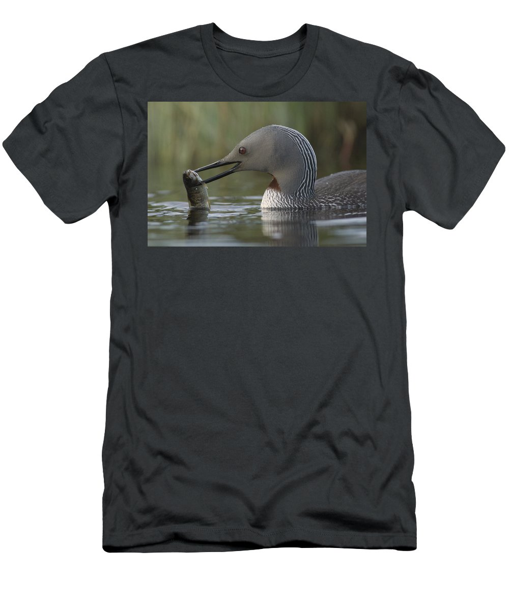 Feb0514 Men's T-Shirt (Athletic Fit) featuring the photograph Red-throated Loon With Fish Alaska by Michael Quinton