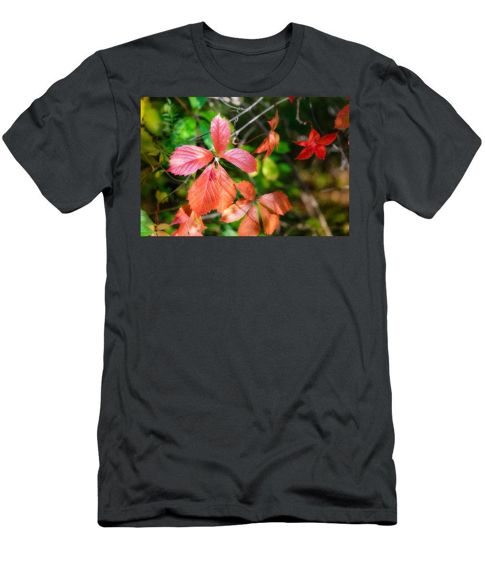 Autumn Men's T-Shirt (Athletic Fit) featuring the photograph Red Viginia Creeper And Maple Leaves by Alain De Maximy