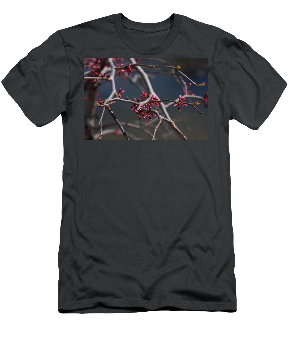 Buds Men's T-Shirt (Athletic Fit) featuring the photograph Redbuds Ready To Pop by Lyle Hatch