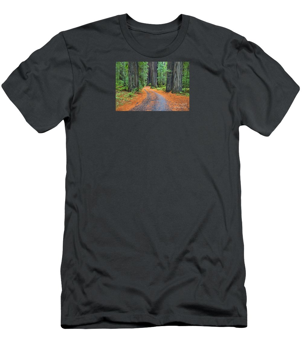 California Men's T-Shirt (Athletic Fit) featuring the photograph Redwood Way by Alice Cahill