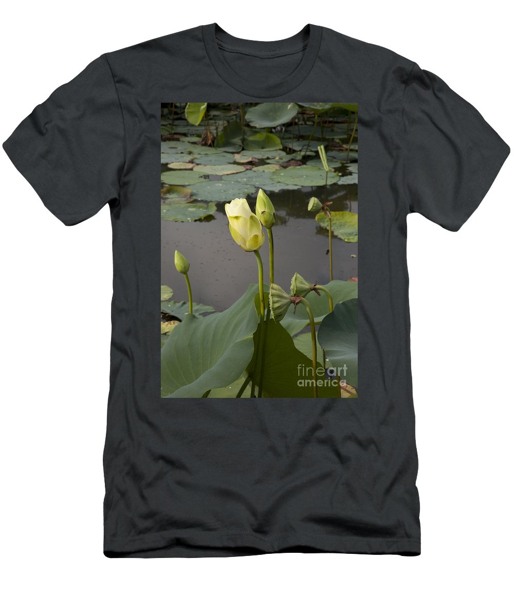 Lotus Men's T-Shirt (Athletic Fit) featuring the photograph Renawal by Amanda Barcon