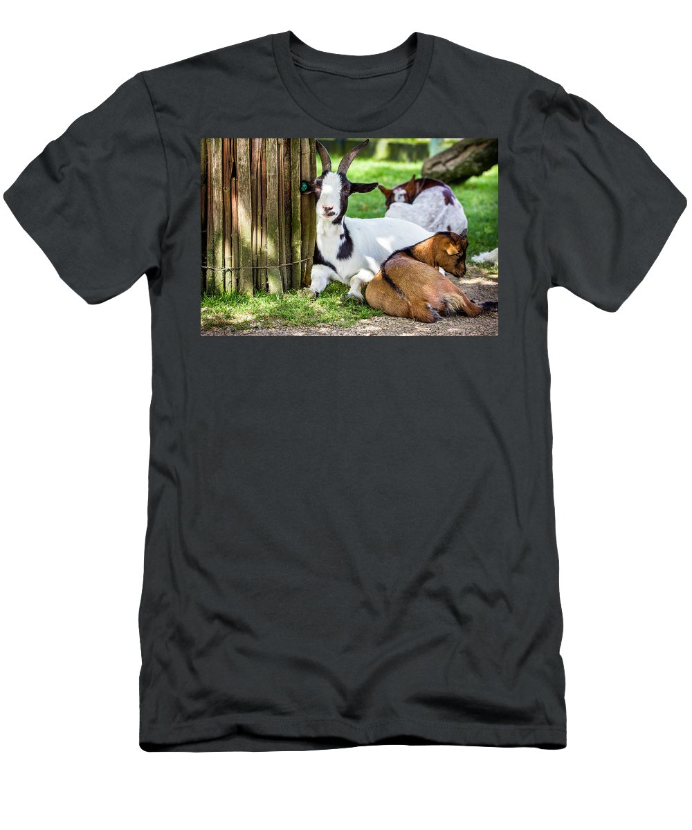 Goat Men's T-Shirt (Athletic Fit) featuring the photograph Resting Goats by Pati Photography
