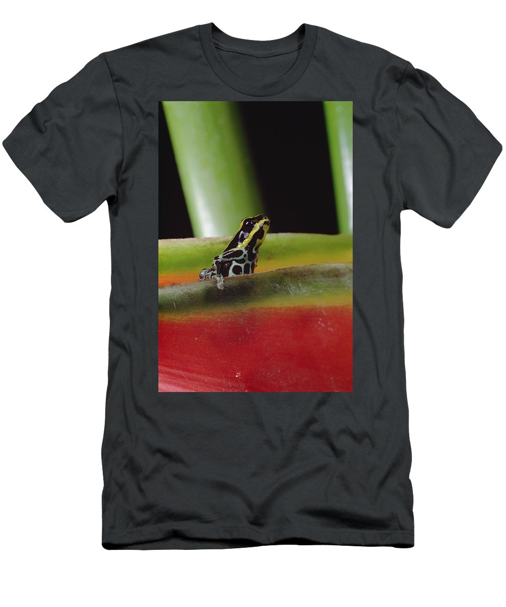 Feb0514 Men's T-Shirt (Athletic Fit) featuring the photograph Rio Madeira Poison Frog Amazonia Ecuador by Mark Moffett