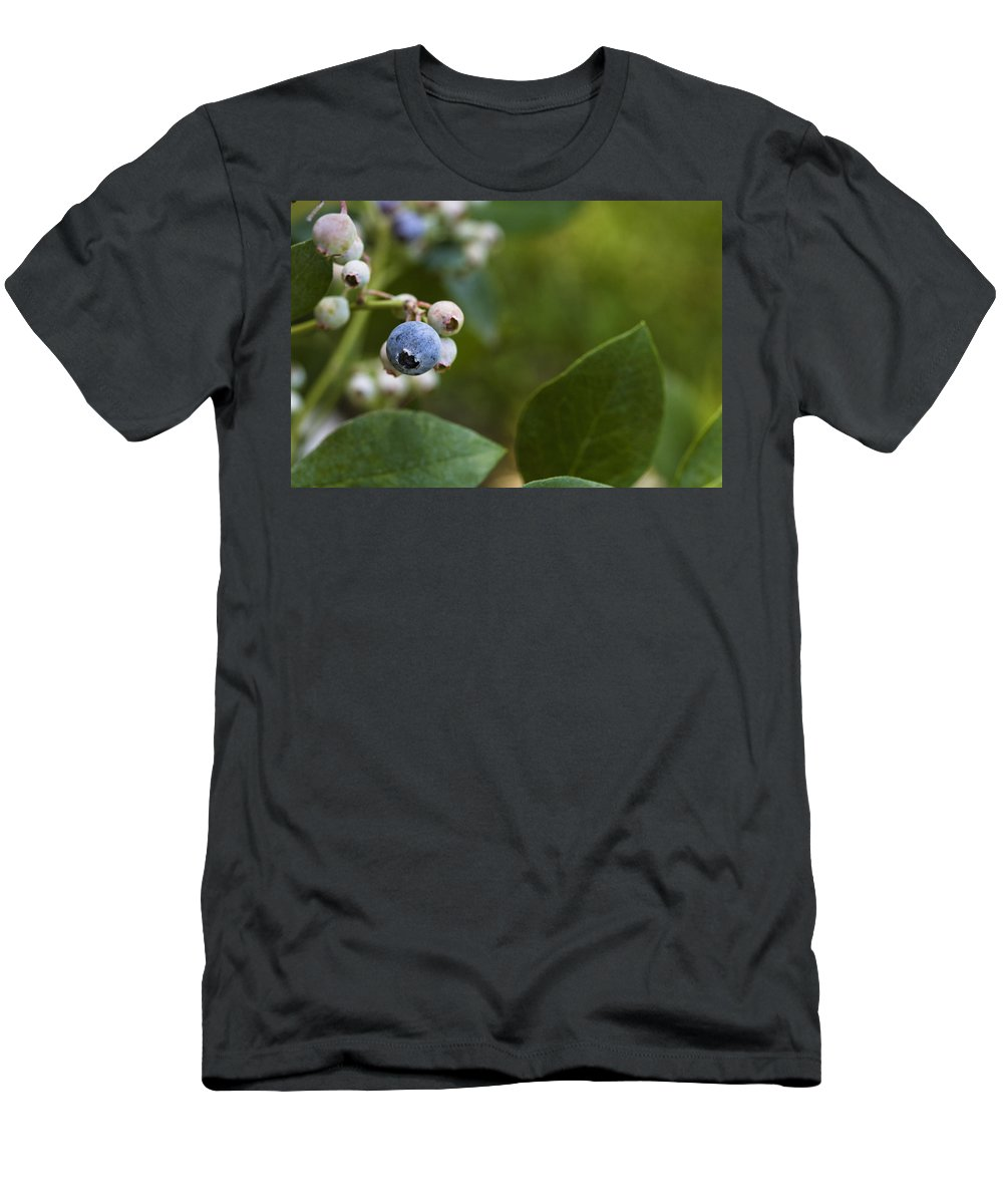Rabbiteye Men's T-Shirt (Athletic Fit) featuring the photograph Ripening Blueberries by Diane Macdonald