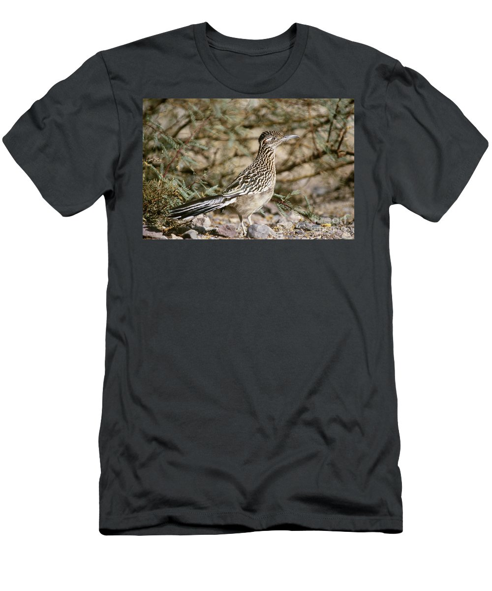 Animal Men's T-Shirt (Athletic Fit) featuring the photograph Roadrunner Geococcyx Californianus by Mark Newman