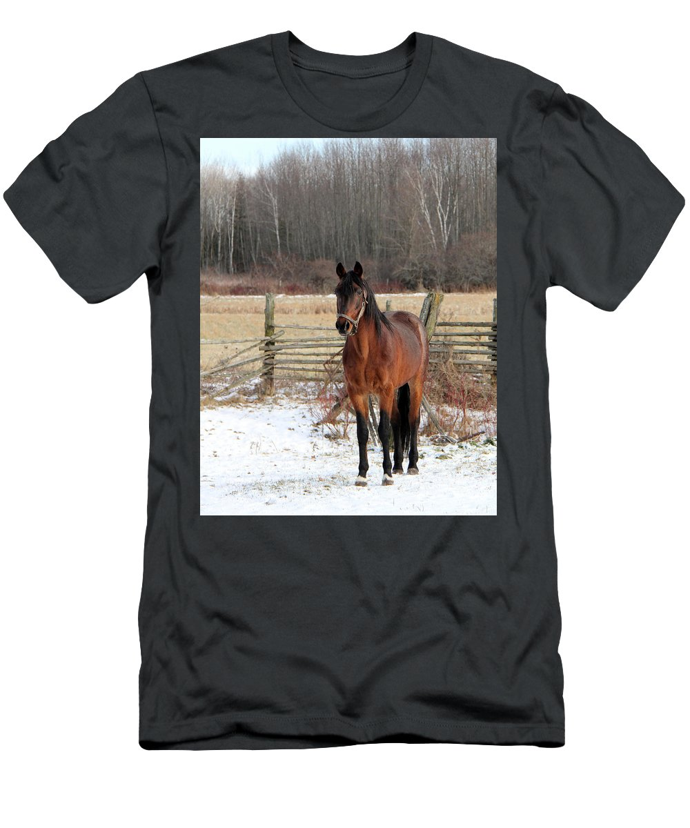 Animal Men's T-Shirt (Athletic Fit) featuring the photograph Roan Revenge 6 by Davandra Cribbie