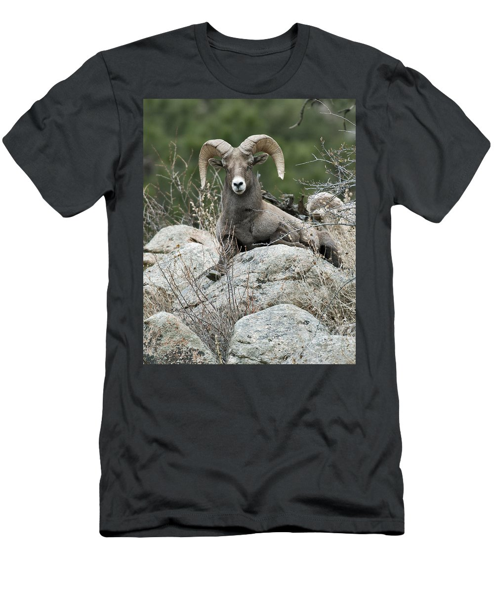 Rocky Mountain Big Horn Men's T-Shirt (Athletic Fit) featuring the photograph Rocky Mountain Big Horn by Gary Langley