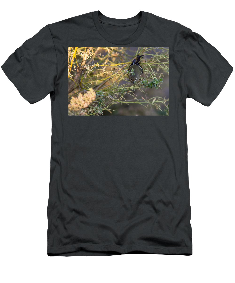 Birds Men's T-Shirt (Athletic Fit) featuring the photograph Ruby Crowned Kinlit by Brian Williamson