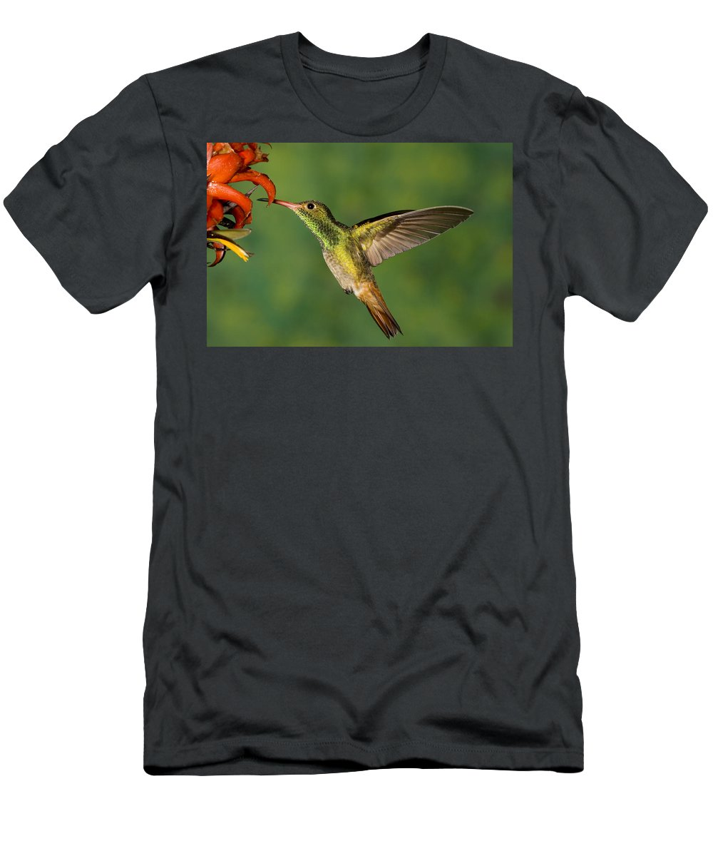 Feb0514 Men's T-Shirt (Athletic Fit) featuring the photograph Rufous Hummingbird Feeding by Tom Vezo
