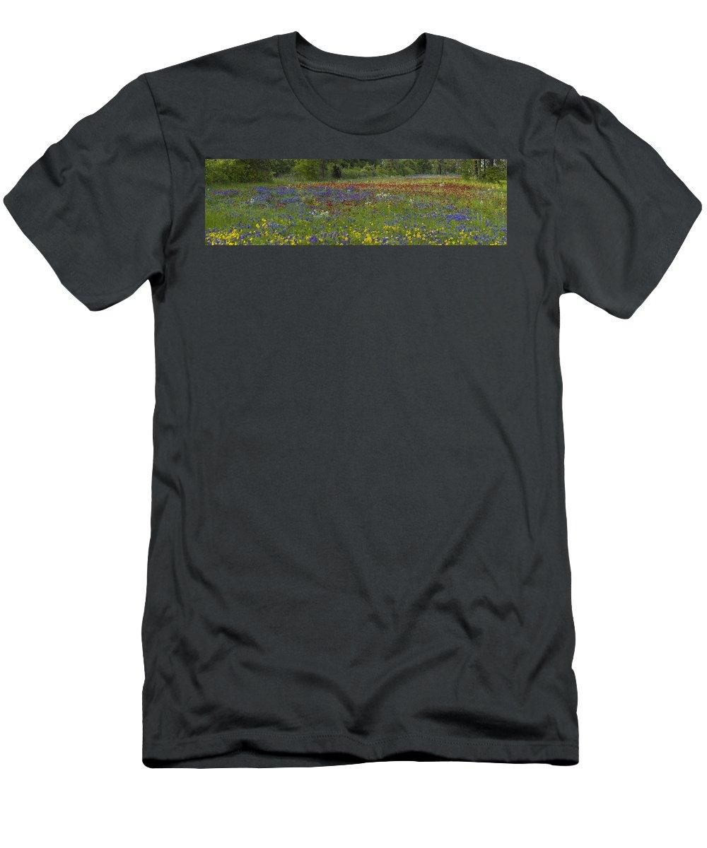 Feb0514 Men's T-Shirt (Athletic Fit) featuring the photograph Sand Bluebonnet Drummonds Phlox by Tim Fitzharris