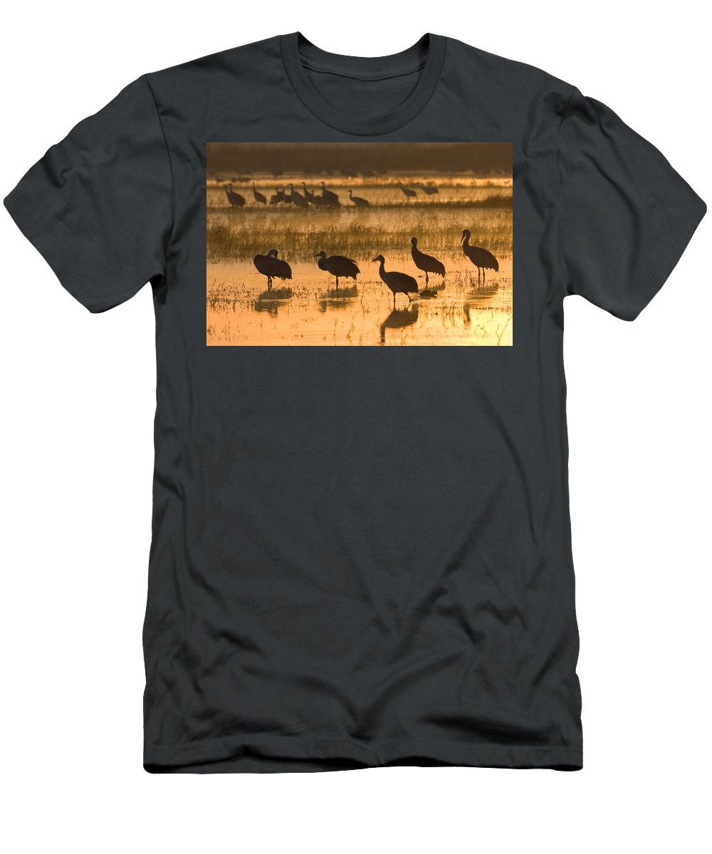 Feb0514 Men's T-Shirt (Athletic Fit) featuring the photograph Sandhill Cranes Bosque Del Apache Nwr by Konrad Wothe